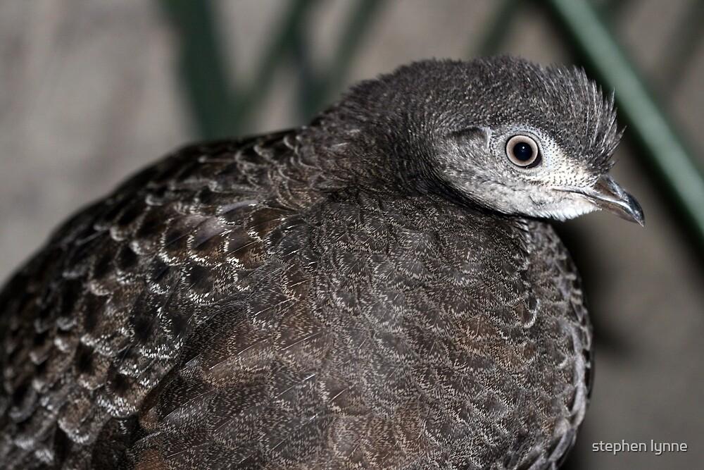 Zoo bird  by stephen lynne