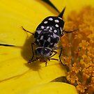 Bug on Daisy by Julie Sherlock