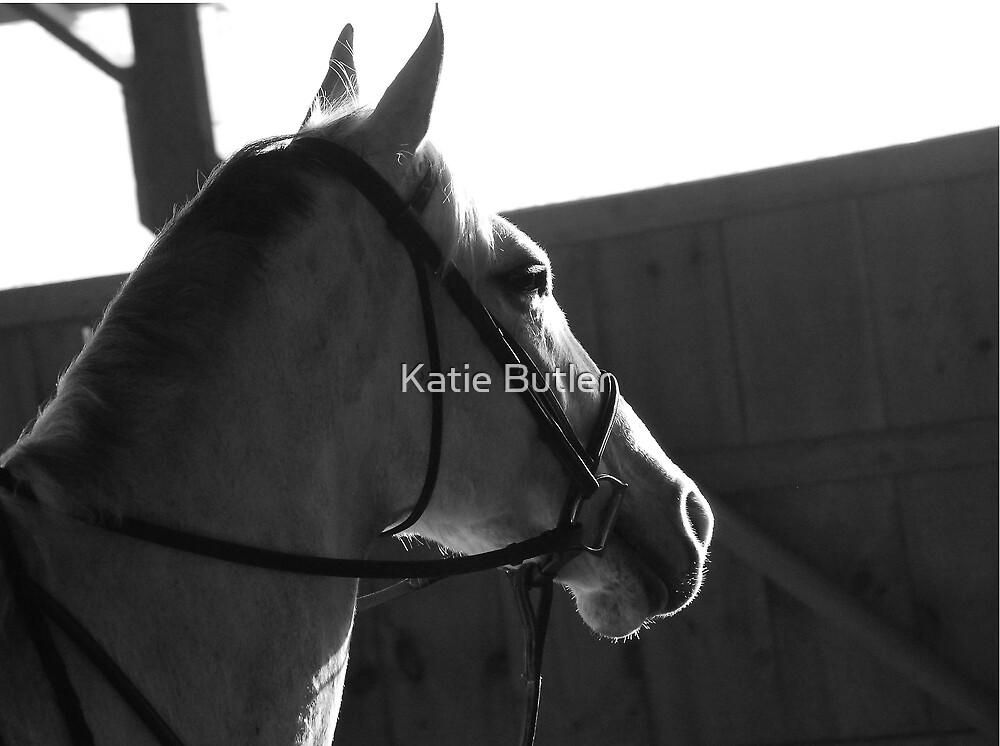 Head Up, Ears forward by Katie Butler