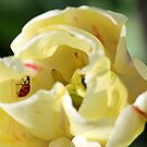 Ladybug in Tulip by JWallace