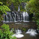 Purakaunui water falls, New Zealand by Norman Repacholi