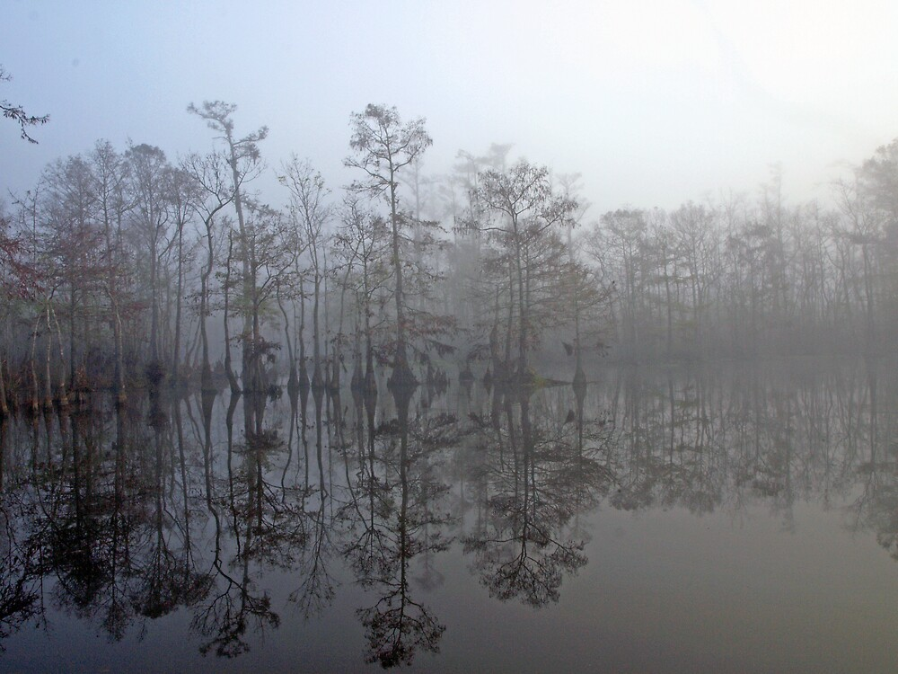 Foggy morning in the marsh by Bill Perry