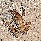 Little Froggie by Virginia N. Fred