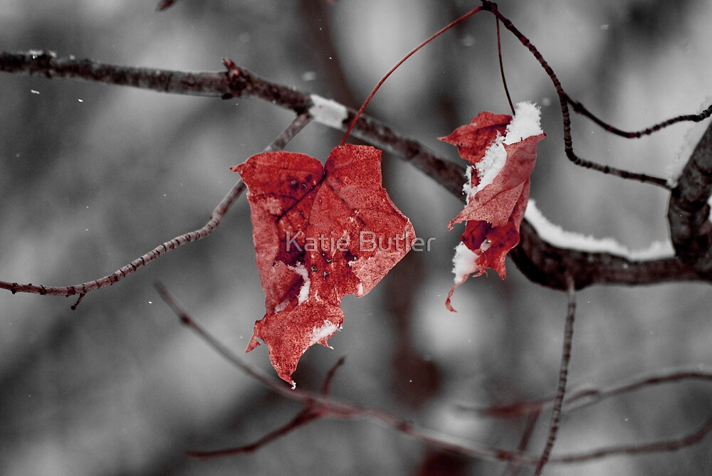 Last of Fall by Katie Butler