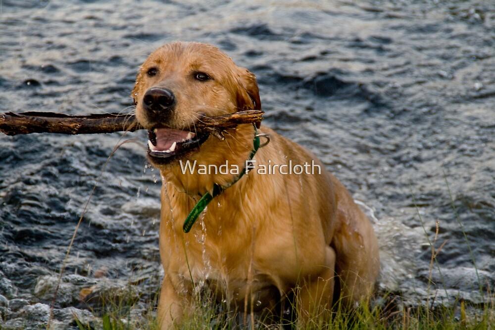 Fetch by Wanda Faircloth