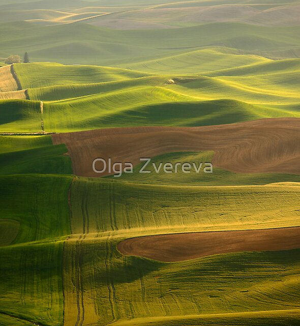 Green Ocean by Olga Zvereva