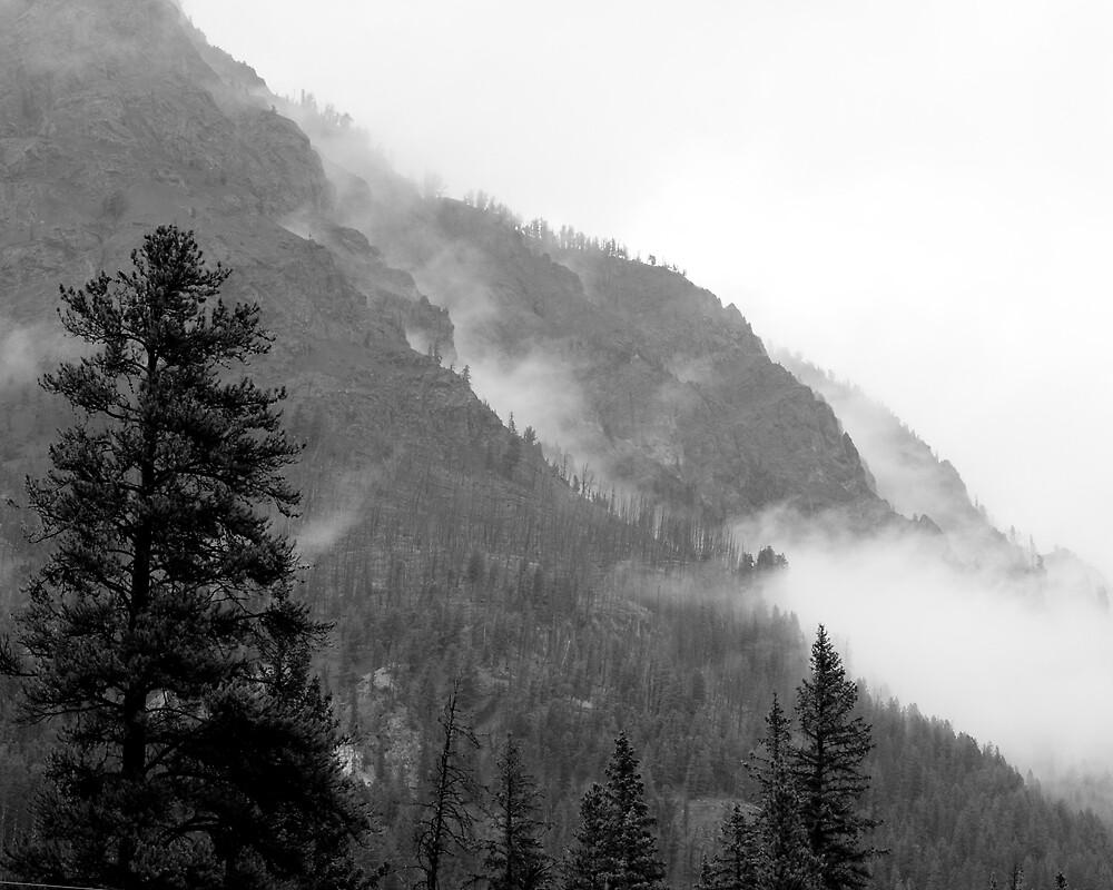 Summer Mist - Silver Gate, Montana by Tim Leonhardt