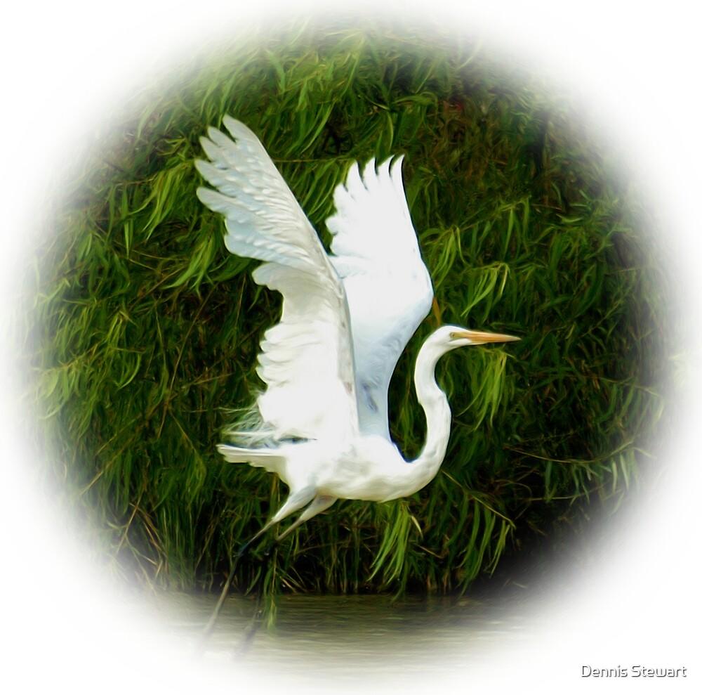 Great Egret Lifting Off  by Dennis Stewart
