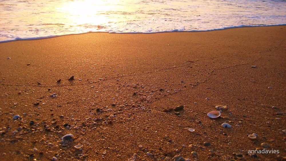Shells by annadavies