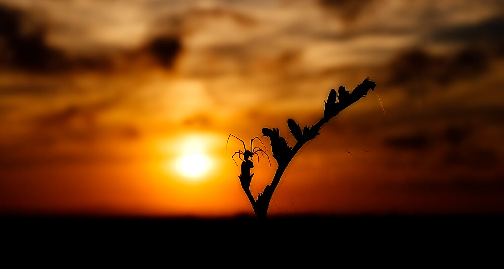 Spider & Sun by Manuel Gual
