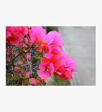 Roadside colour Photographic Print