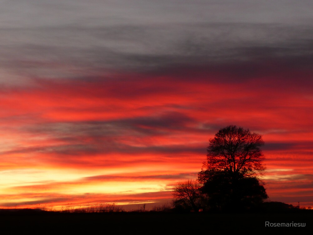 Blood Red Sunset by Rosemariesw
