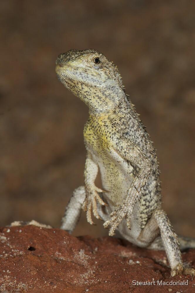 Eyrean earless dragon by Stewart Macdonald