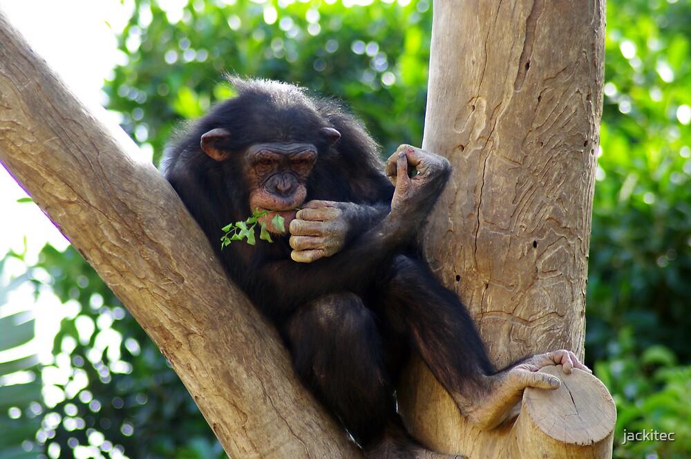 Sad Chimp by jackitec