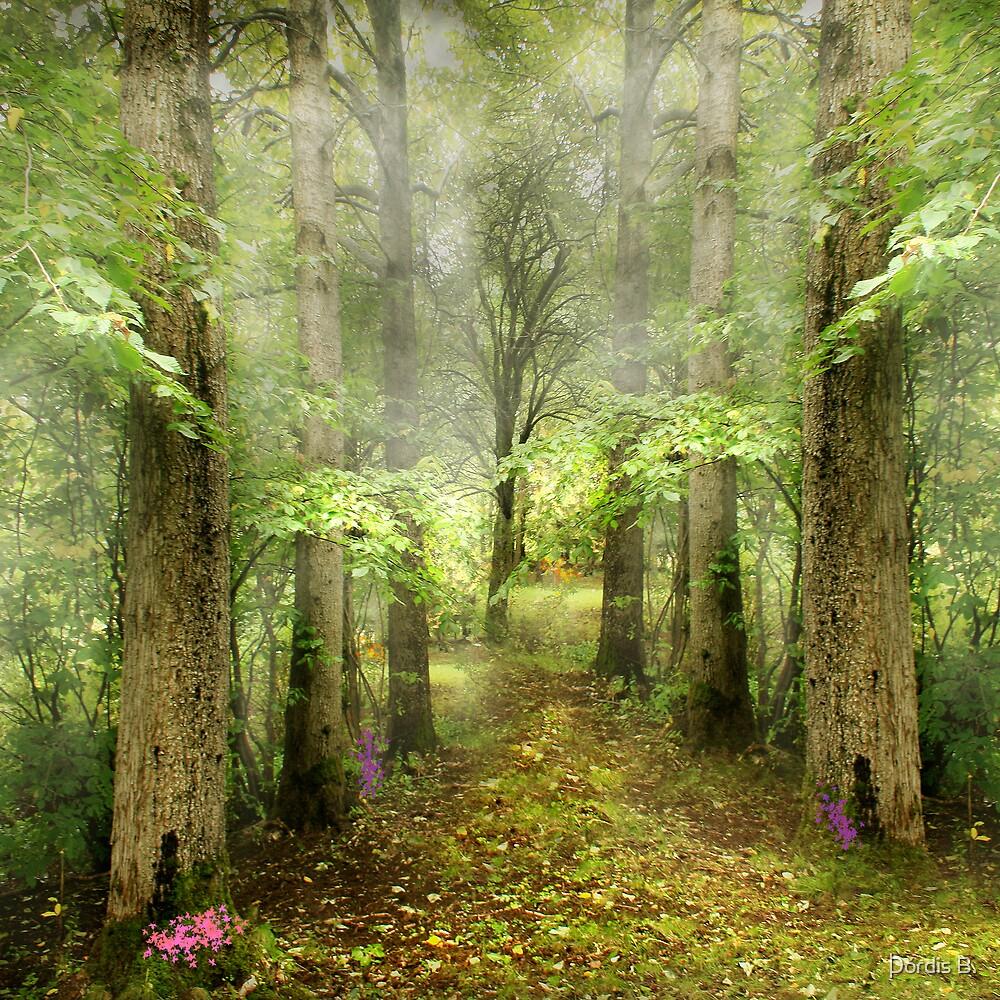 Magic Forest by Þórdis B.