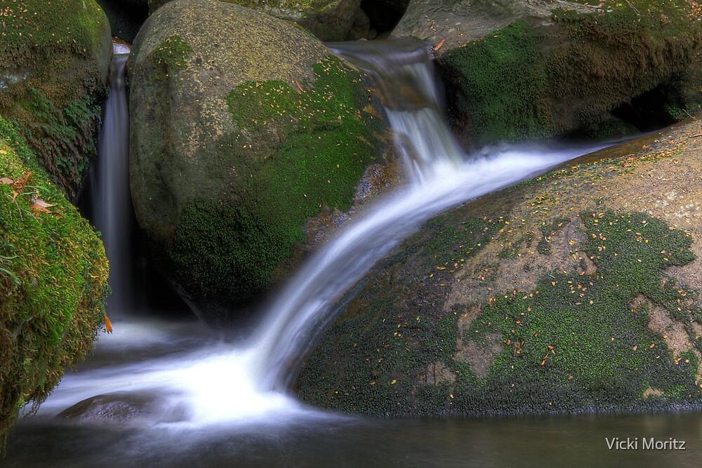 Taggerty river at Keppels falls by Vicki Moritz