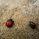 Little & Large  (jewelled bug series) by Of Land & Ocean - Samantha Goode