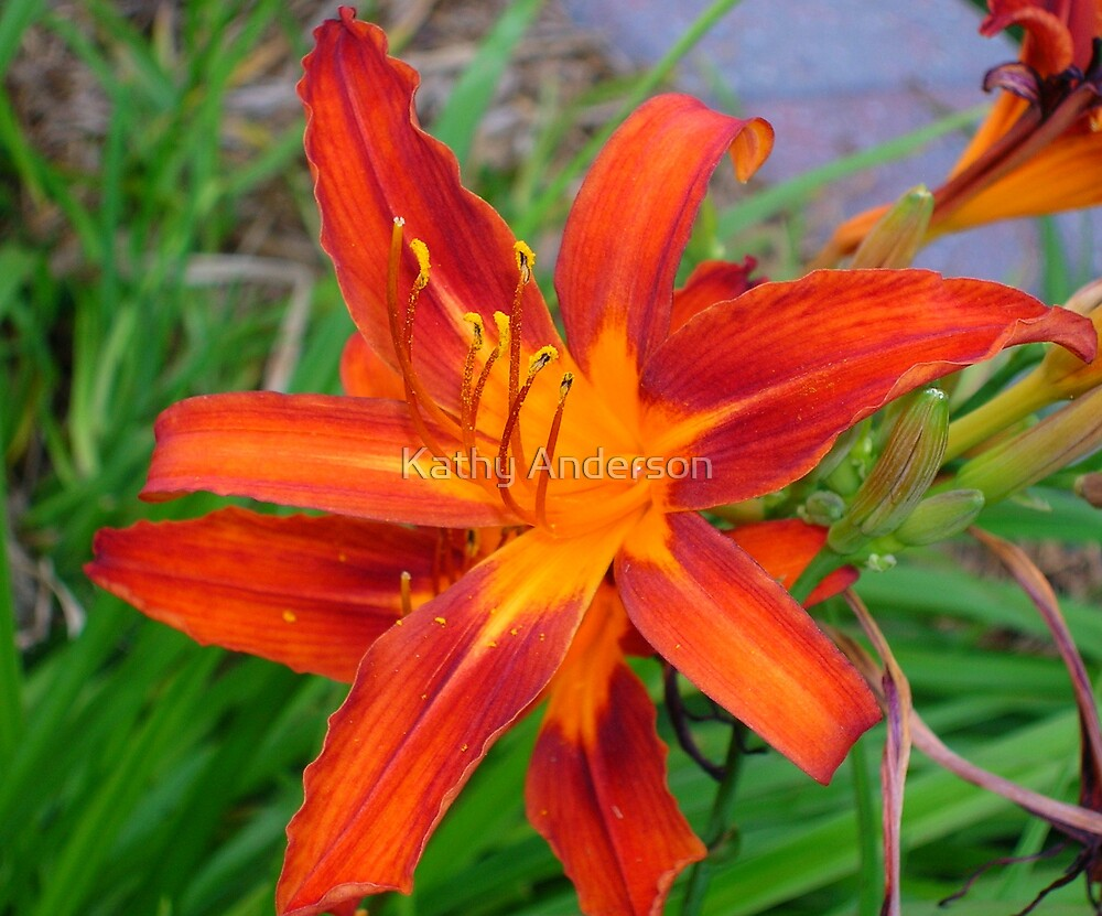 Fire Lily by Kathy Anderson