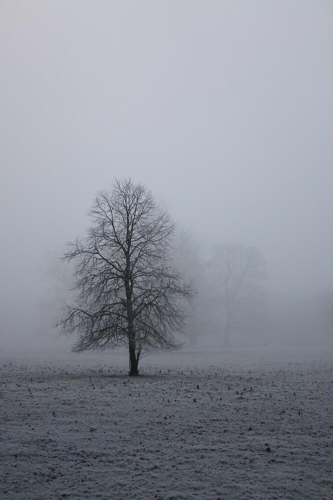 Freezing Fog 1 by Abigail Allardyce