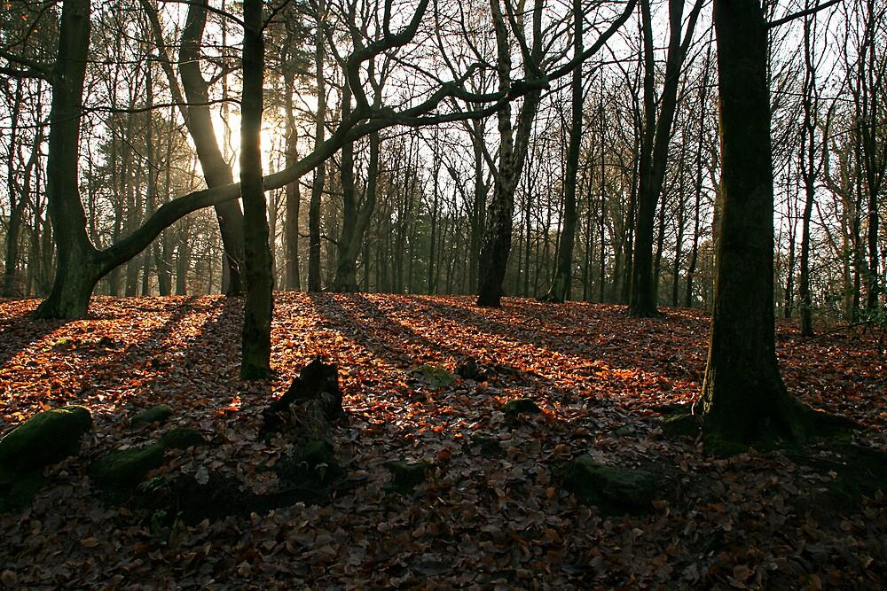 Trees, sun and shadows by jdphotos