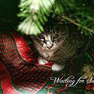 Waiting for Santa by MDossat