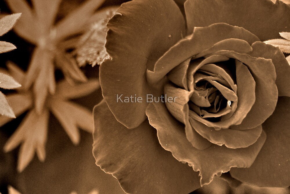 Just a Rose by Katie Butler