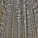 Snow Scenes - HDR Series - Forest Lane by JThill