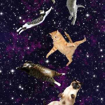 Cats in Space by DaniHoffmann