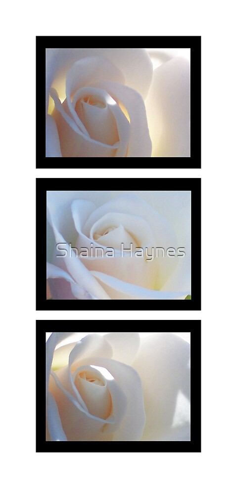 Purity Series  by Shaina Haynes