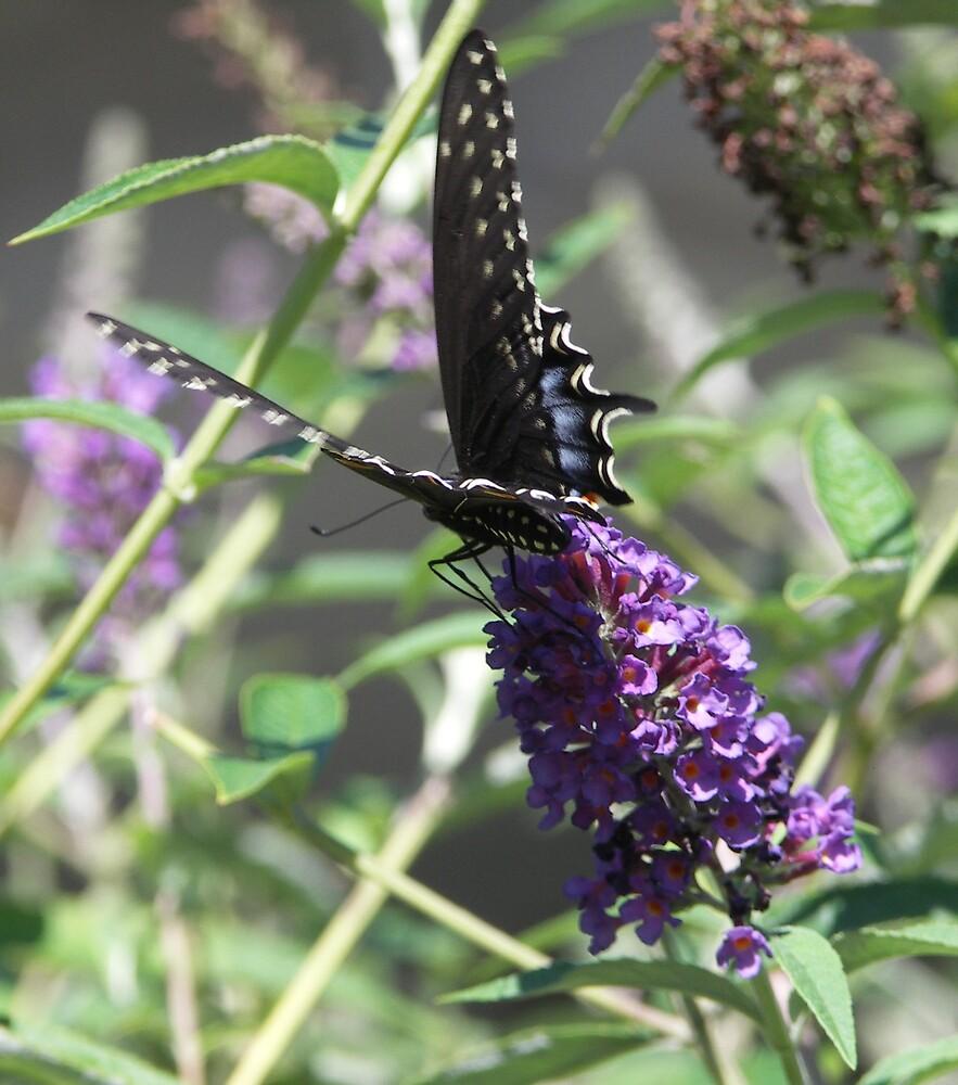 Butterfly Beauty 2 by Marilyn Jones