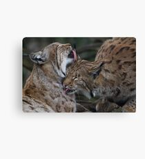 Caring for each other Canvas Print