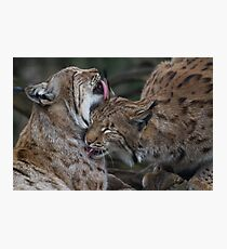 Caring for each other Photographic Print