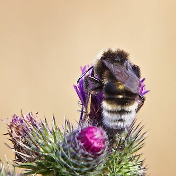 Bee Being Busy by InspiraImage