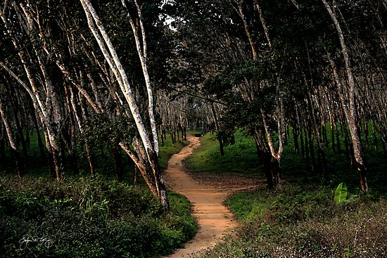 Path Through Rubber Trees by Wayne King