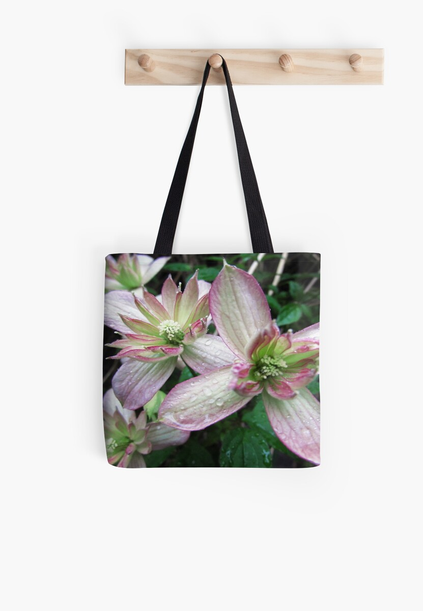 Clematis by Catherine Maughan