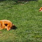 Dog Day Afternoon by Chet  King