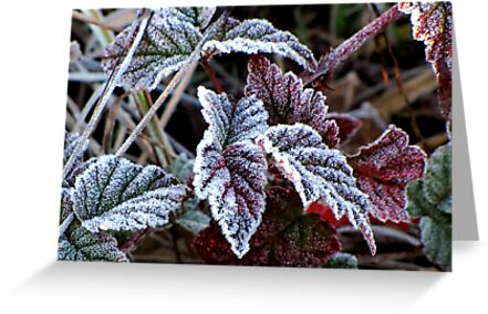 Frosty Morning at Kirk Park by Chuck Gardner