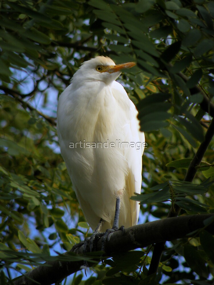 Perched On A Tree by artisandelimage