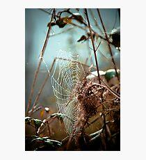 Web  Photographic Print