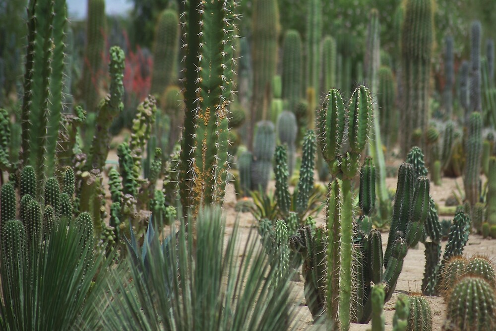 Cactus Garden V by Dennis Begnoche Jr.