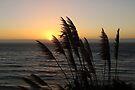 Central Coast Sunset by Sun Dog Montana