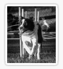 Black And White Scottish Sheepdog Border Collie Agility Dog Sticker