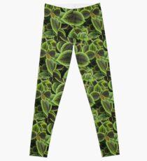 Green Ric Rac Edging Leggings