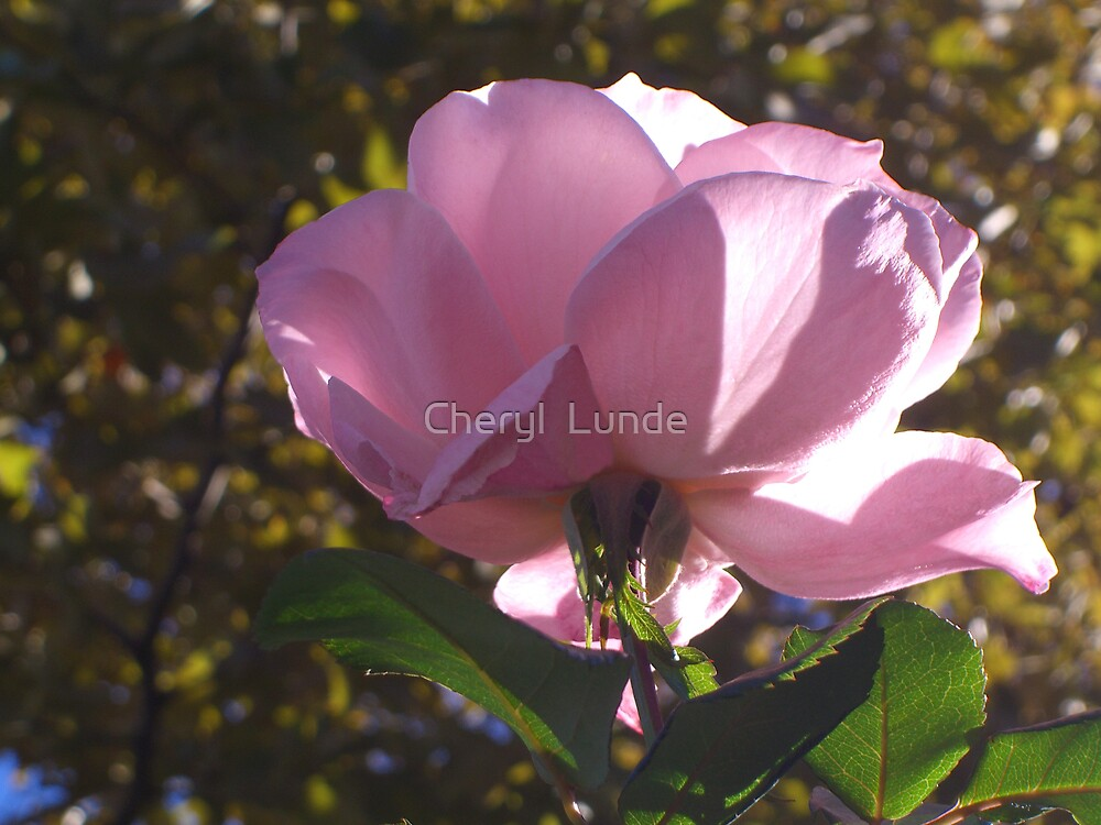A Rose by any other Name... by Cheryl  Lunde