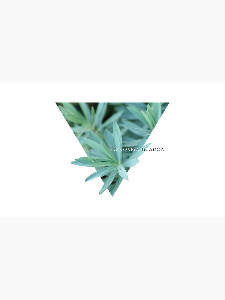 Euphorbia Glauca von WelshieNZ