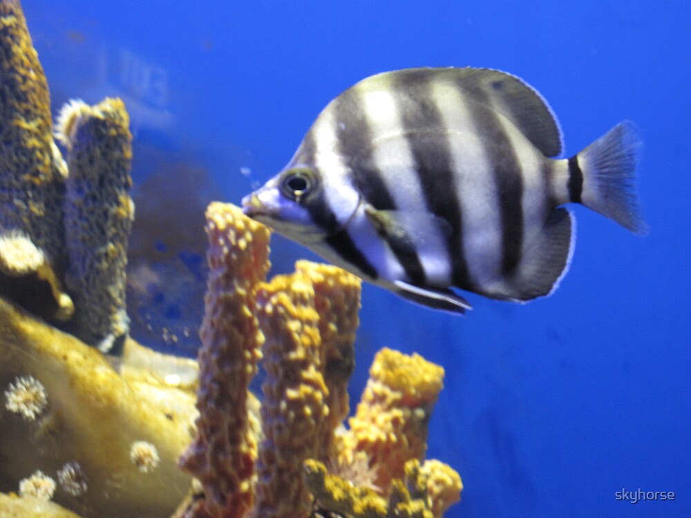 Melbourne Aquarium - Display Tank by skyhorse