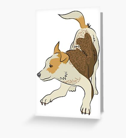 Heeler pub dog chasing tail Greeting Card