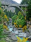 Bridge over Shotover River (NZ) by amko