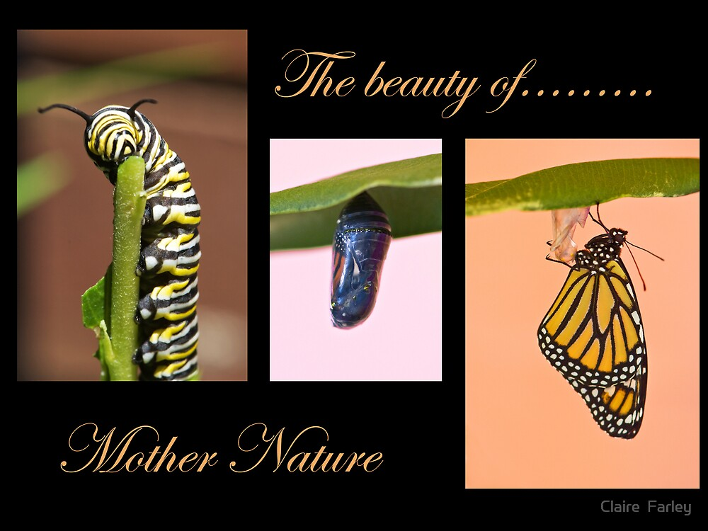 Nature's Beauty by Claire  Farley