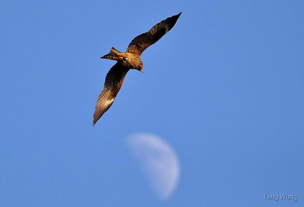 Fly me to the Moon ! by Tony Wong